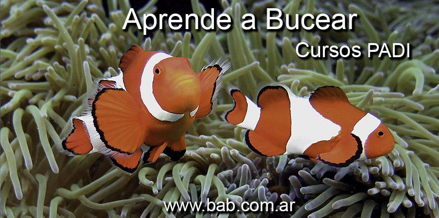 Curso de Buceo PADI
