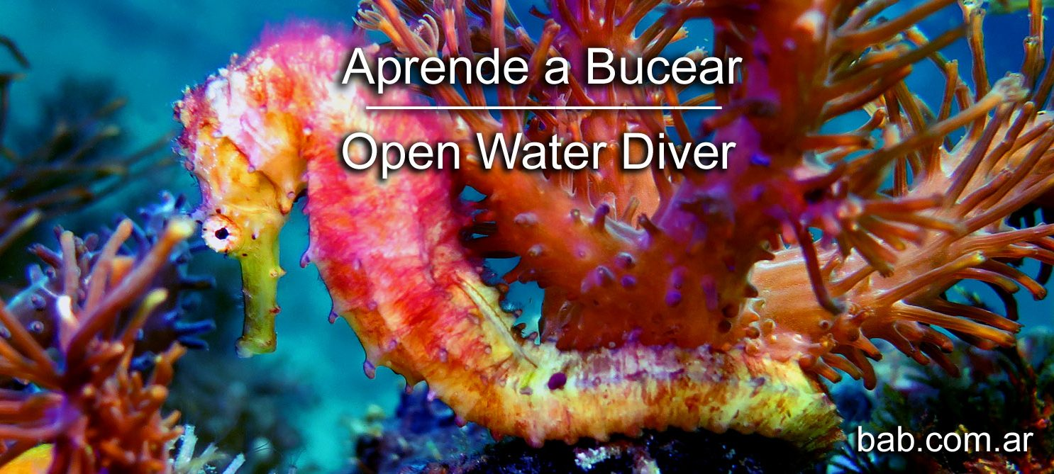 Buceo Open Water Diver