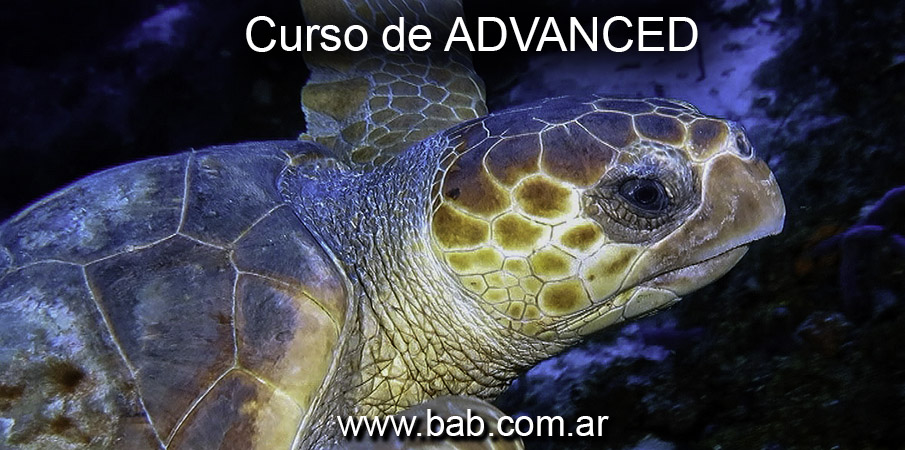 Curso de Advanced